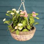 Aged Ceramic Hanging Basket (Blue Colour) by Fallen Fruits