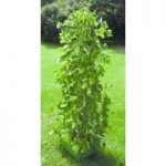 Bean and Pea Patio Planter by Selections