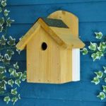 Camera Bird Nest Box by Gardman