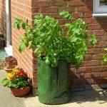 Potato Tub Planters (Pack of 2) by Gardman