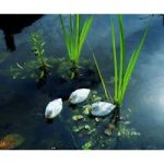 Plastic Floating Duckling in White by Apollo Garden