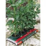 Tomato & Vegetable Growbag Waterer (Set of 4) by Selections