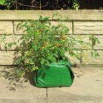 Tomato Grow Cube Planter & Compost by Gardman