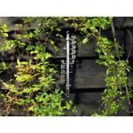 Filigree Garden Thermometer by Gardman