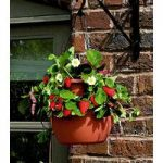 Hanging Strawberry Cascade Planter by Gardman