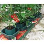 Tomato & Vegetable Growbag Pots (Set of 6) By Selections