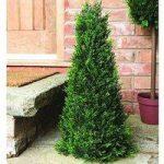 Cypress Leaf Effect Artificial Topiary Obelisk (60cm) by Gardman