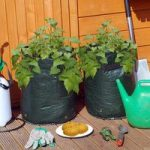Potato Planters (Pack of 2) by Kingfisher