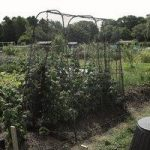 Walk-in Crop Protection Cage by Gardman