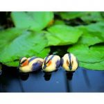 Plastic Floating Ducklings (Set of 3) in Yellow by Apollo Garden