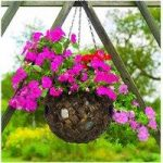 Water Hyacinth Ball Hanging Basket with Holes (23cm) by Gardman