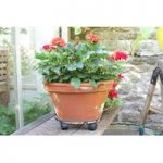 Round Metal Plant Caddy Pot Mover (35cm) by Smart Garden