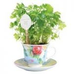 Parsley In A Teacup Window Herb Planter by Fallen Fruits