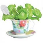 Basil In A Teacup Window Herb Planter by Fallen Fruits