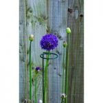 Single Stem Plant Support Stake 100cm (Pack of 3) by Gardman