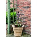 Mini Maypole Pot Plant Support by Gardman