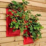 Verti-Plant Wall Planters in Strawberry (Pack of 2) by Burgon and Ball