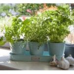 Windowsill Herb Pots on a Tray in Blue by Sophie Conran
