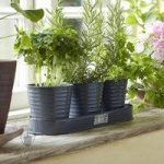 Windowsill Herb Pots on a Tray in Grey by Sophie Conran