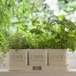 Herb-Pots-in-a-Tray in Jersey Cream by Burgon & Ball