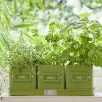 Herb-Pots-in-a-Tray in Green Enamel by Burgon & Ball