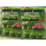 4 Tier Greenhouse Staging (Pack of 3) by Gardman