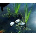 Plastic Floating Ducklings (Set of 3) in White by Apollo Garden