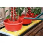 Plastic Garden Plant Halos (Set of 3) in Red by Garland