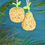 Hanging Apple Bird Seed by Fallen Fruits