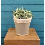 Ceramic Bucket Planter by Fallen Fruits