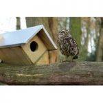 Little Owl Wooden Nesting Box by Fallen Fruits